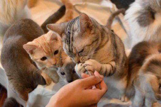 猫の多頭飼いでみんながハッピーに暮らすコツ