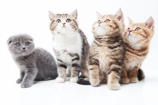 猫の多頭飼い|ケンカやストレス、被災パニックへの処方箋